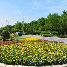 漢陽區從事園林養護公司圖片