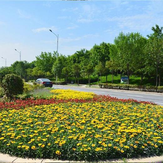 绿化养护图