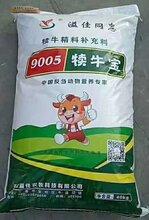 犊牛专用颗粒饲料开口精补料断奶生产厂家反刍动物营养专家图片