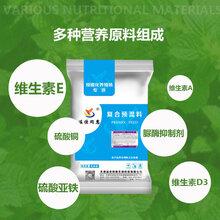 繁殖母牛专用预混料浓缩料提高繁殖能力发情快天津饲料生产厂家