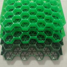 厂信誉棋牌游戏直销植草格园林绿化环保型塑料植草格图片