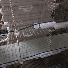 三層鴿籠組裝瀚捷三層鴿籠廠家圖片