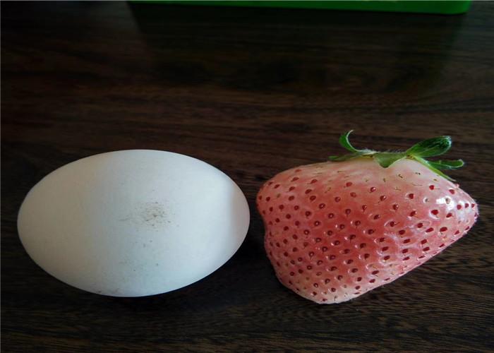 草莓種苗基地訂購報價、草莓種苗品種介紹