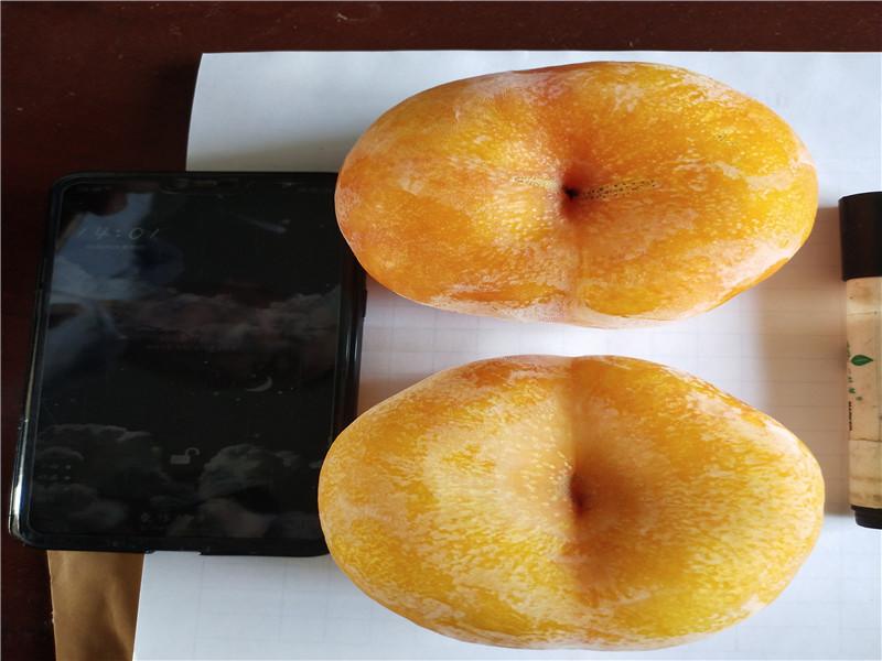 安徽蚌埠1-21蟠桃樹苗育苗基地賣價