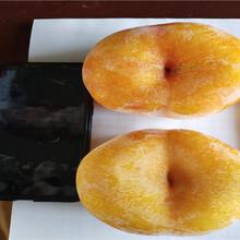 晚熟桃樹苗育苗基地報價圖片