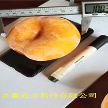 新疆可克達拉晚熟桃樹苗樹苗地方有圖片