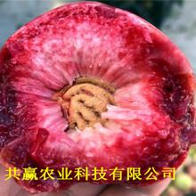 貴州銅仁早熟蟠桃樹苗出售價錢圖片