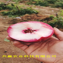 安徽淮南冬雪桃樹樹苗這里賣的好圖片