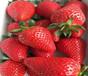 河北沧草莓苗联系方式、圣诞红草莓苗农户供应