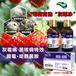 灰霉凈:腐霉啶酰菌胺