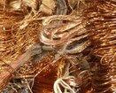 郑州废铜电缆回收-电缆回收-郑州电缆线回收图片