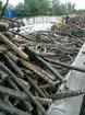 沧州馈线回收-电缆回收-沧州地理电缆回收图片