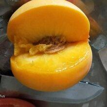 雅安桃树苗优良品种,雅安桃树苗苗圃图片