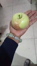 黑蘋果苗優良品種、中秋王蘋果苗新品種