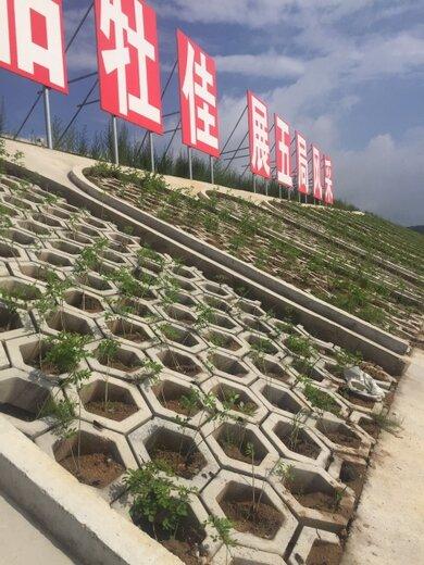 邊坡綠化紫穗槐圖