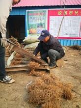 雙遼公路綠化施工圖片