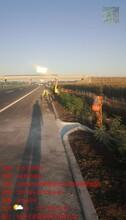 雙遼公路紫穗槐種植公司圖片