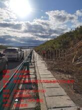 白城紫穗槐綠化工程承接圖片