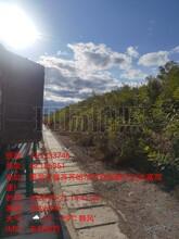 吉林市承包紫穗槐綠化施工圖片