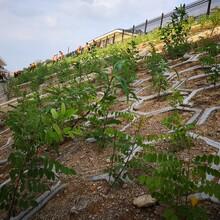 四平鐵路綠化工程承接圖片
