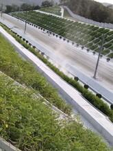 雙遼承包高鐵綠化圖片