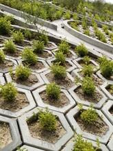 白山紫穗槐綠化工程承包圖片