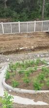 吉林承接鐵路綠化圖片