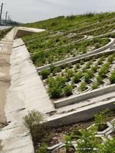 吉林市承包高鐵綠化圖片