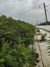 吉林市承接鐵路綠化圖片
