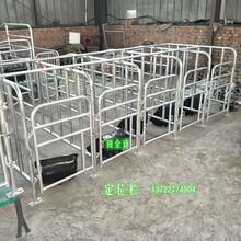 母豬限位欄養豬設備熱鍍鋅定位欄一組十豬位帶食槽的價格圖片