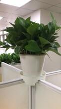 坪山商場植物訂購圖片