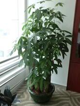 寶安銀行綠植供應圖片
