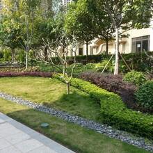 坪山園林綠化工程養護圖片