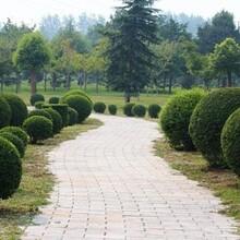 羅湖城市綠化圖片