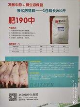 推荐强化肥猪料1包长200斤——肥190中图片