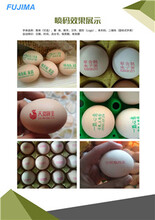 廣州雞蛋噴碼機廠家報價圖片