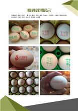 銅陵雞蛋噴碼機圖片