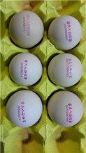 寧波雞蛋噴碼機廠家直銷