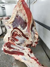 澳洲牛肉四分体203厂供应商图片