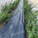 園林防草布除草布規格齊全可定制防草布