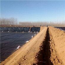 朝阳HDPE防渗膜垃圾场土工膜耐老化图片