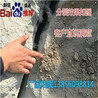 甘肅巖石開采液壓劈裂機技術指導