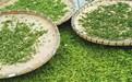 文冠果樹的樹葉可以制茶嗎