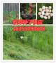 临安市养羊种植什么牧草种子哪里有卖的图片