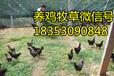 东阿县哪里卖黑麦草种子多少钱一斤