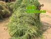 潍坊市那里有卖高丹草种子的多少钱一斤