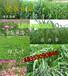 黑龙江省大庆市哪里有卖牧草种子的多少钱一斤