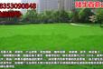 青岛市胶南市护坡草坪种子批发厂家