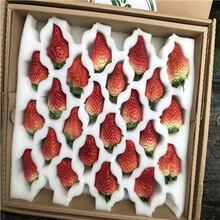 草莓種苗批發基地紅顏草莓苗苗場電話圖片