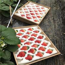 山東草莓苗基地巧克力草莓苗多錢一棵圖片